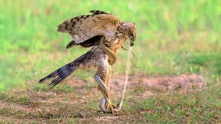 10 Strongest Rivalries in the Animal Kingdom