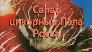 Салат обыкновенный Пала Росса Кочанный 🌿 обзор: как сажать, семена салата Пала Росса Кочанный