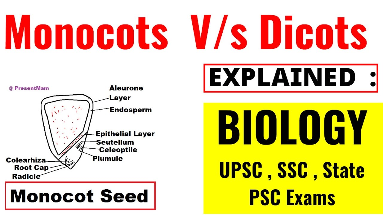 Monocots vs dicots seeds fully explained biology lecture upsc monocots vs dicots seeds fully explained biology lecture upsc ssc state psc exams pooptronica