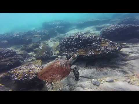 Snorkelling at Great Keppel Island
