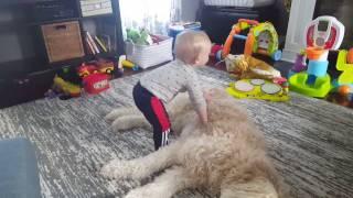 赤ちゃんが犬の上で「もふもふのベッドだ、わーい!」(動画)