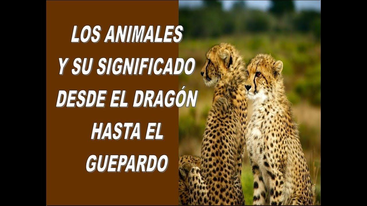 Animal De Poder Los Animales Y Su Significado Desde El Dragón