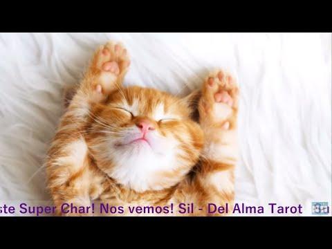 🐱Sàbado De Super Chat 📅 27-09-19 🧡Del Alma Tarot 🐱 Interactivo 🌼