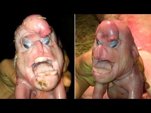 Download Youtube: 10 Terrifying Creatures Created By Science