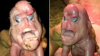 10 terrifying creatures created by science