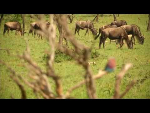 KENYA   CONSERVANCY TOURISM Feature HD