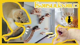 พาชมโรงแรมน้องแมว Happy Land Cat Hotel 🐈