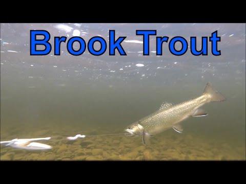 Brook Trout Fishing, New Brunswick, Canada 2016
