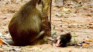 OMG !! MOM ANNA PLEASE STOP DO BAD ON ALBA COS ALBA SO WEAK , BABY NEED FEEDING MILK .
