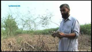 Pakistan: One Farmer's Plight