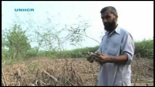Pakistan: One Farmer's Plight