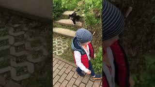 Прикол про ребенка и кошку