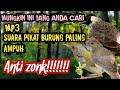 Suara Pikat Burung Anti Zonk Suara Pikat Burung Liar Hb  Mp3 - Mp4 Download