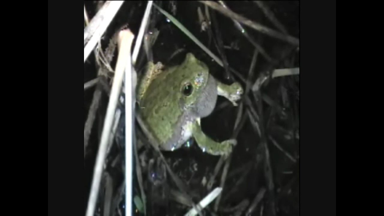 Wisconsin Frogs and Toads – The Frog Lady