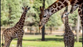 Taronga Western Plains Zoo - Dubbo, Australia