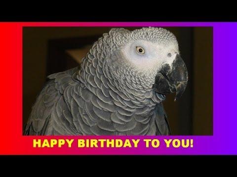 Sprechender Papagei Singt Happy Birthday To You Talking