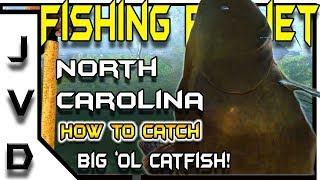 Fishing Planet Tips | How to Catch Catfish | Big 'ol Flatheads | Neherrin River, North Carolina