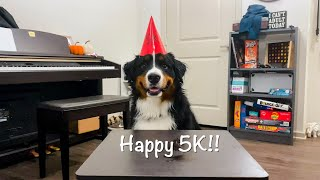 Bernese Mountain Dog Hit 5K SUBSCRIBERS!