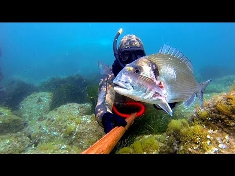 Kuulata ja alla laadida tasuta muusika chasse sous marine corse spearfishing
