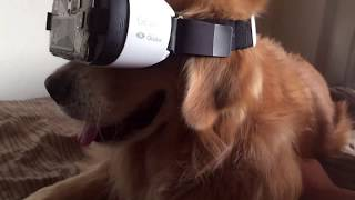 doggo does VR