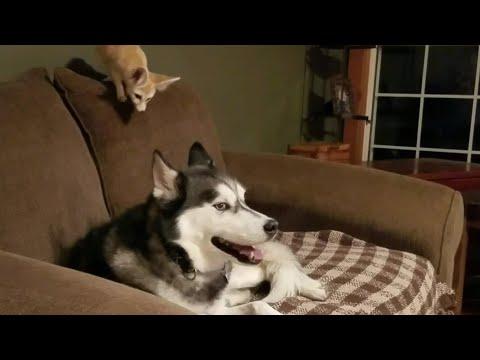 Annoying Fennec Fox 😂