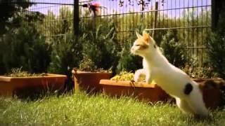 кот в замедленной съёмке.flv