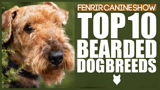 TOP 10 BEARDED DOG BREEDS