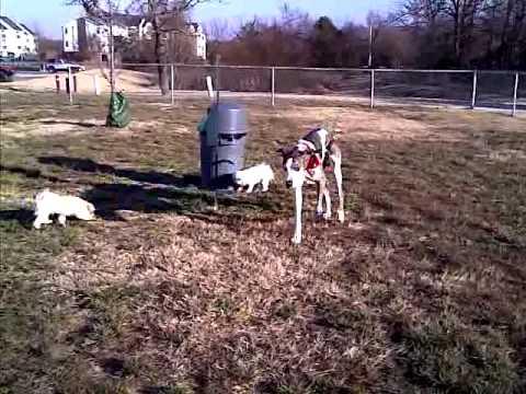 the-gang-at-the-crowne-at-razorback-dog-park