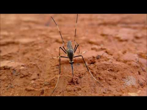 Best Mosquito Sound Repellent (15kHz) And Video - 6 Hours