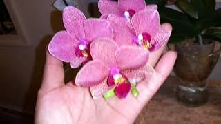 Cómo regar tus orquídeas sin correr riesgo de pudrirlas