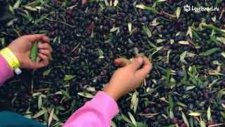 Как израильские друзы делают оливковое масло?(Друзья! Если вам нравится наш замечательный и светлый проект об Израиле С ЛЮБОВЬЮ, посетите нас на LoveIsrael.ru..., 2014-11-21T06:07:30.000Z)