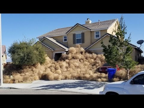 Tumbleweeds invade Victorville - The town taken over by tumbleweed