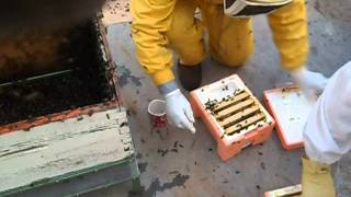 Beekeeping Queen Rearing and Mini Nuc