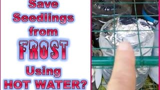Quick Tip - Save Your Seedlings From Freezing In Late Spring Frost Using Hot Water