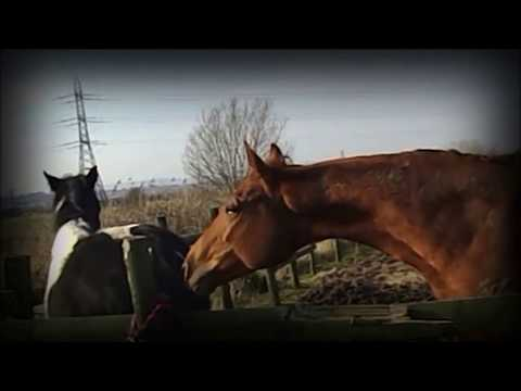 Young horse meets his paddock buddy