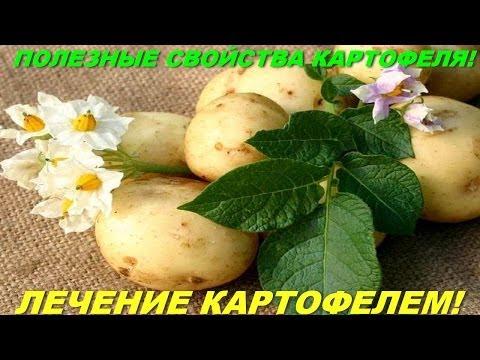 Полезные свойства картофеля! Лечение картофелем!