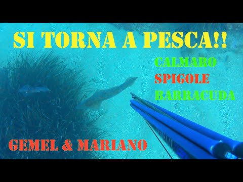 Pesca In Apnea Post Covid 19 - Si Torna A Pesca! Spearfishing Back After Quarantine