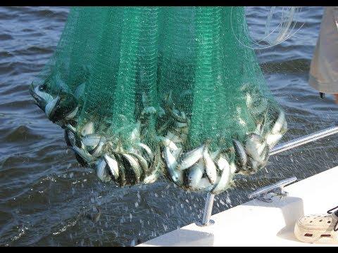 Skokie Lagoons Bait Catching