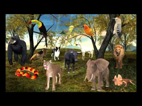 3D Air, Land and Sea Animals, Insects