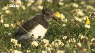 Дикая Шотландия: Гебридские острова (Серия 3)