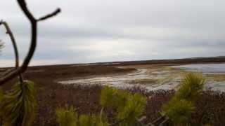 Весенняя охота на гуся 2013г. (3ч)