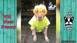 VN Pets Funny ● Top Những Pha Hài Hước Nhất Của Động Vật (P12) - Chó Mèo 2017