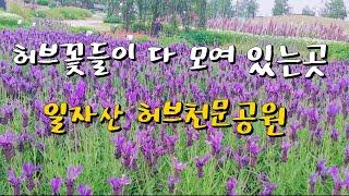 #60일자산 허브천문공원,서울 힐링 스팟,산책하기 좋은…