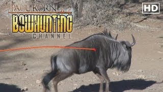 HUGE Wildebeest ARROWED on South African Safari  Bow hunting Plains Game