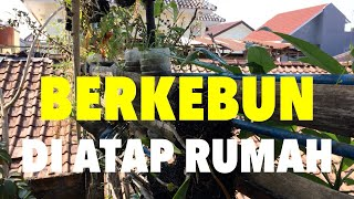 Video Berkebun di atap rumah download MP3, 3GP, MP4, WEBM, AVI, FLV Juni 2018