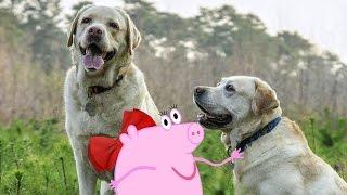 1серия. Удивительные собаки