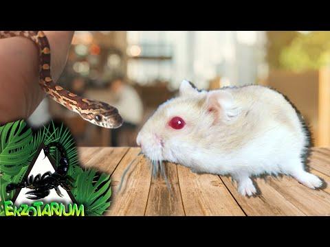 Вопрос: Где содержатся змеи?