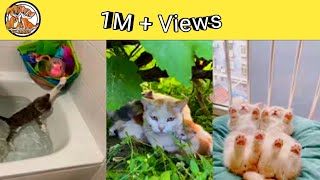 Baby Cats  Cute Funny Videos Compilation #shorts