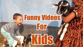Funny Videos For Kids With Goat Cheese - Baby Goats Playing And Jumping