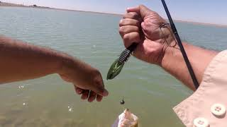 Imperial Valley Bass Fishing